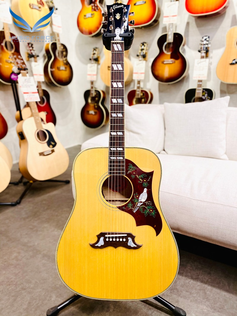 Gibson Montana Dove Original-Antique Natural(신품) 깁슨 도브 오리지날 - 22240022